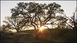 BILL VIOLA. The Darker Side of Dawn (El lado oscuro del amanecer), 2005. Video instalación, sin sonido, 61'.
