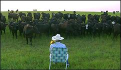 María Cañas. Al toro bravo échale vacas (2015)