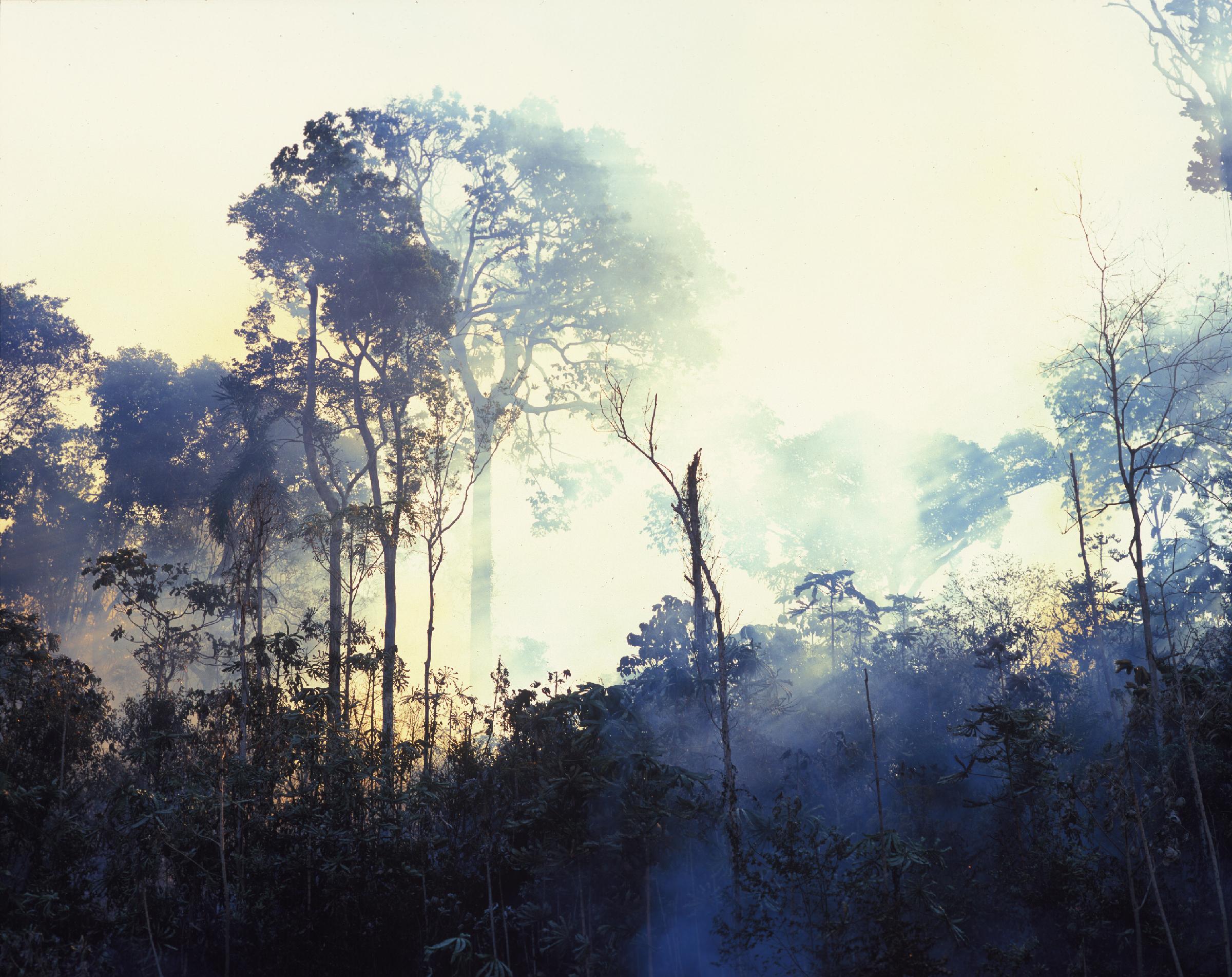 Sergio Vega. Paradise Burning, 2008. © Galerie Karsten Greve